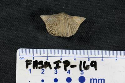FHSM IP-169