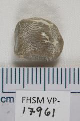 FHSM VP-17961