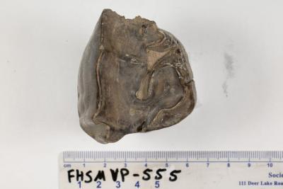 FHSM VP-555