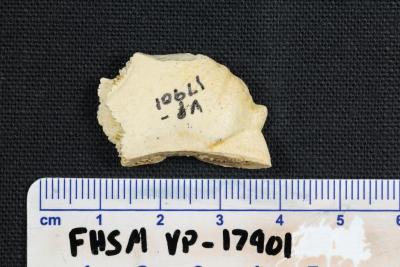 FHSM VP-17901