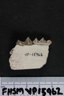 FHSM VP-15962