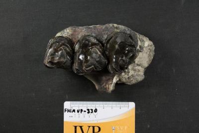 FHSM VP-330