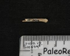 FHSM VP-10574