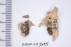 FHSM VP-5095