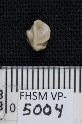 FHSM VP-5004