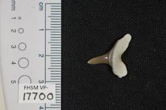 FHSM VP-17700