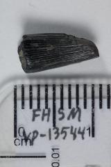 FHSM VP-13544