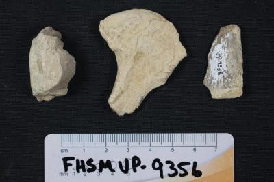 FHSM VP-9356
