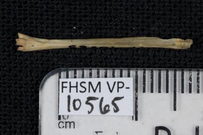 FHSM VP-10565