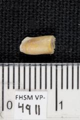 FHSM VP-4911