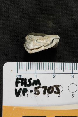 FHSM VP-5703