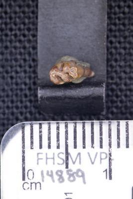 FHSM VP-14889