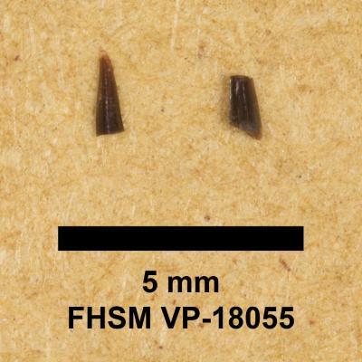 FHSM VP-18055