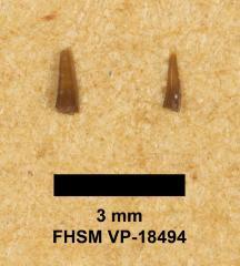 FHSM VP-18494
