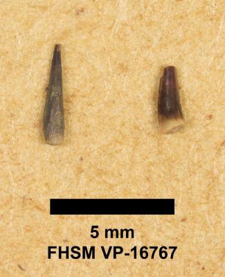 FHSM VP-16767