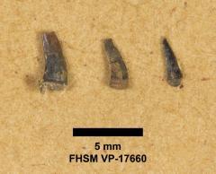 FHSM VP-17660