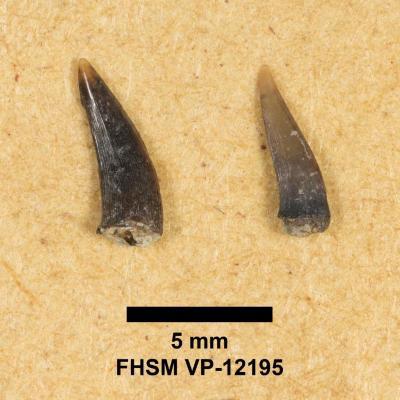 FHSM VP-12195