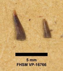 FHSM VP-16766