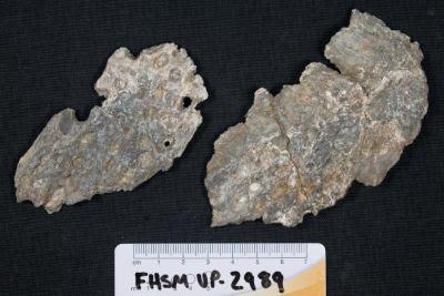 FHSM VP-2989