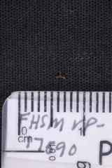 FHSM VP-17590