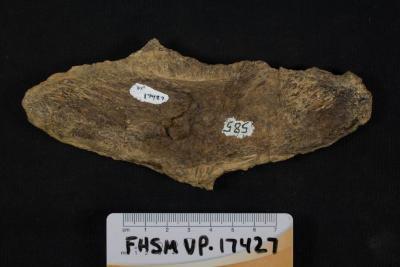 FHSM VP-17427