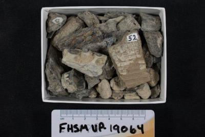 FHSM VP-19064