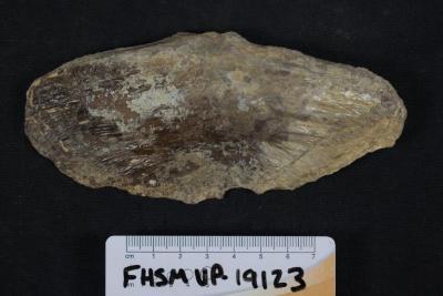 FHSM VP-19123