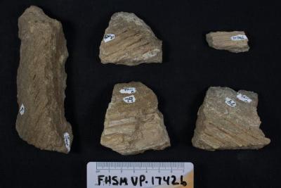 FHSM VP-17426