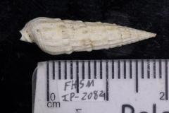 FHSM IP-2082
